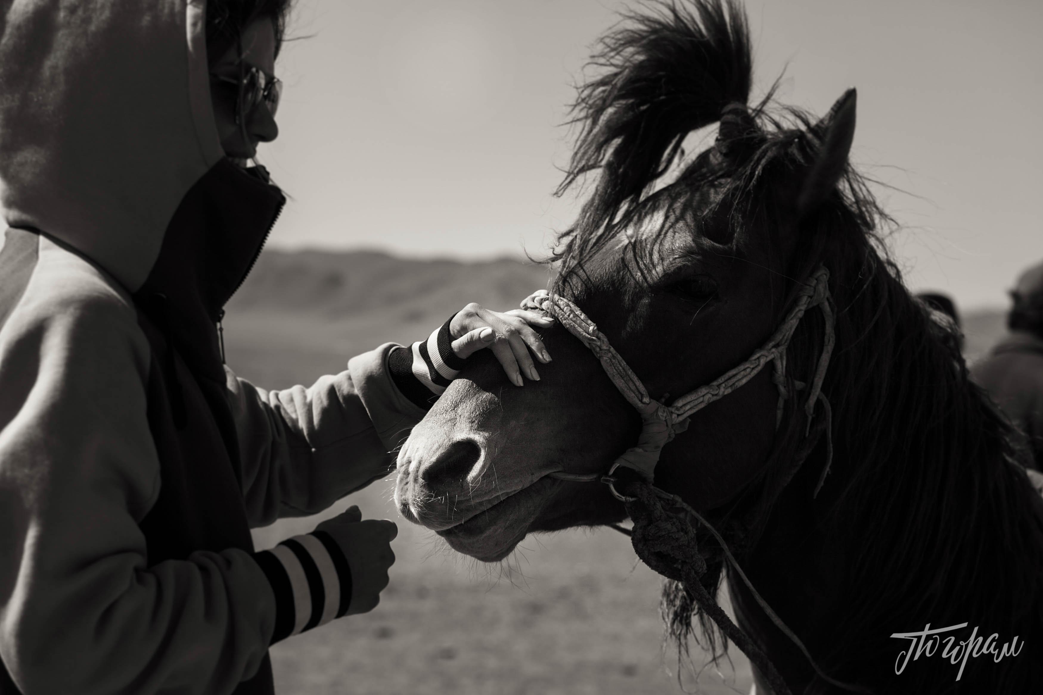 mongoliapogoram25
