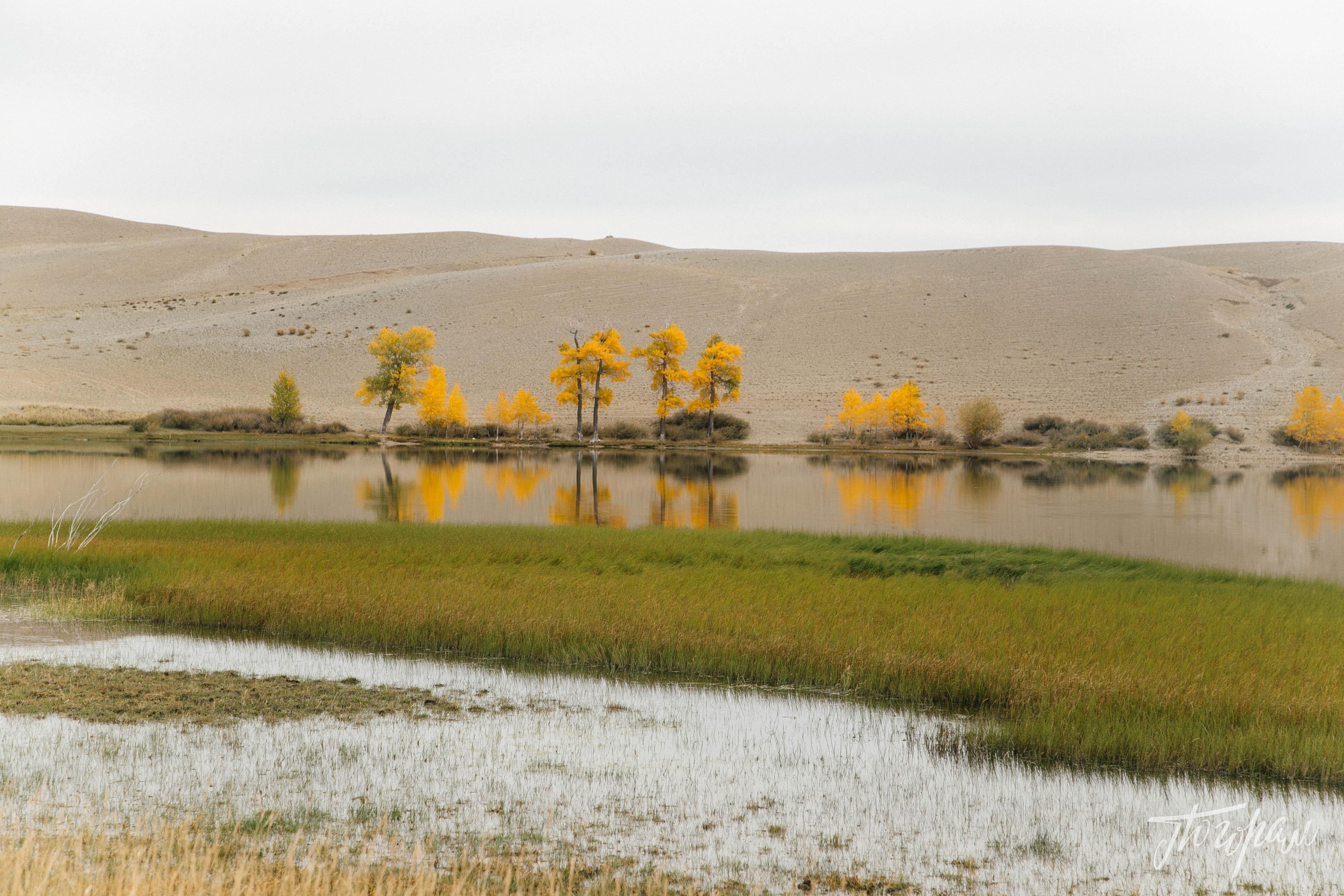 mongoliapogoram246