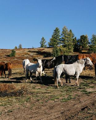 mongoliapogoram135.jpg