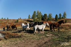 mongoliapogoram135