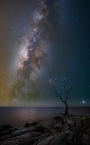 Death Tree.jpg
