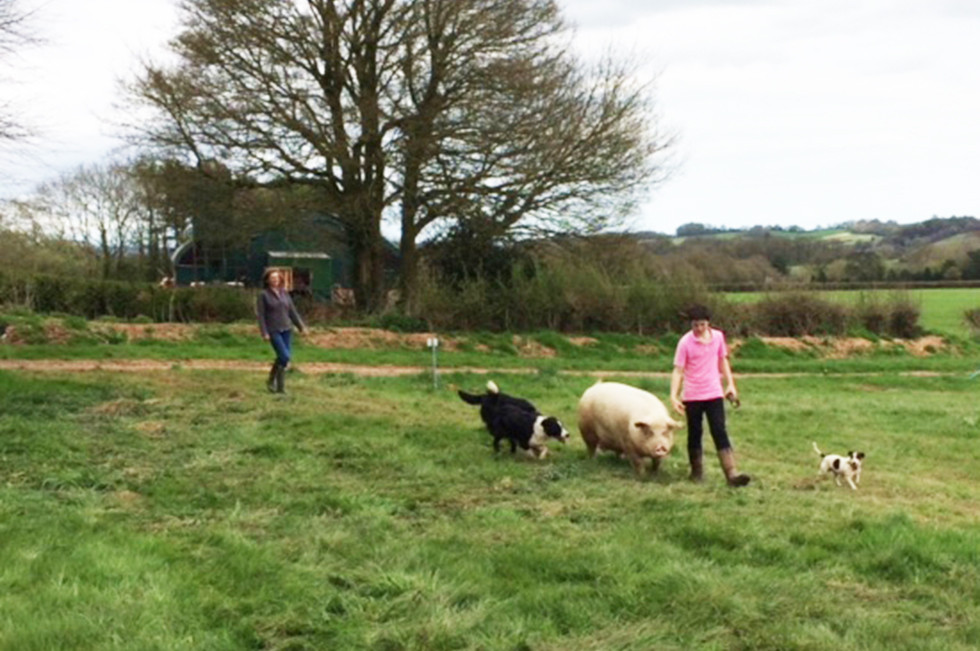 Walking the pig