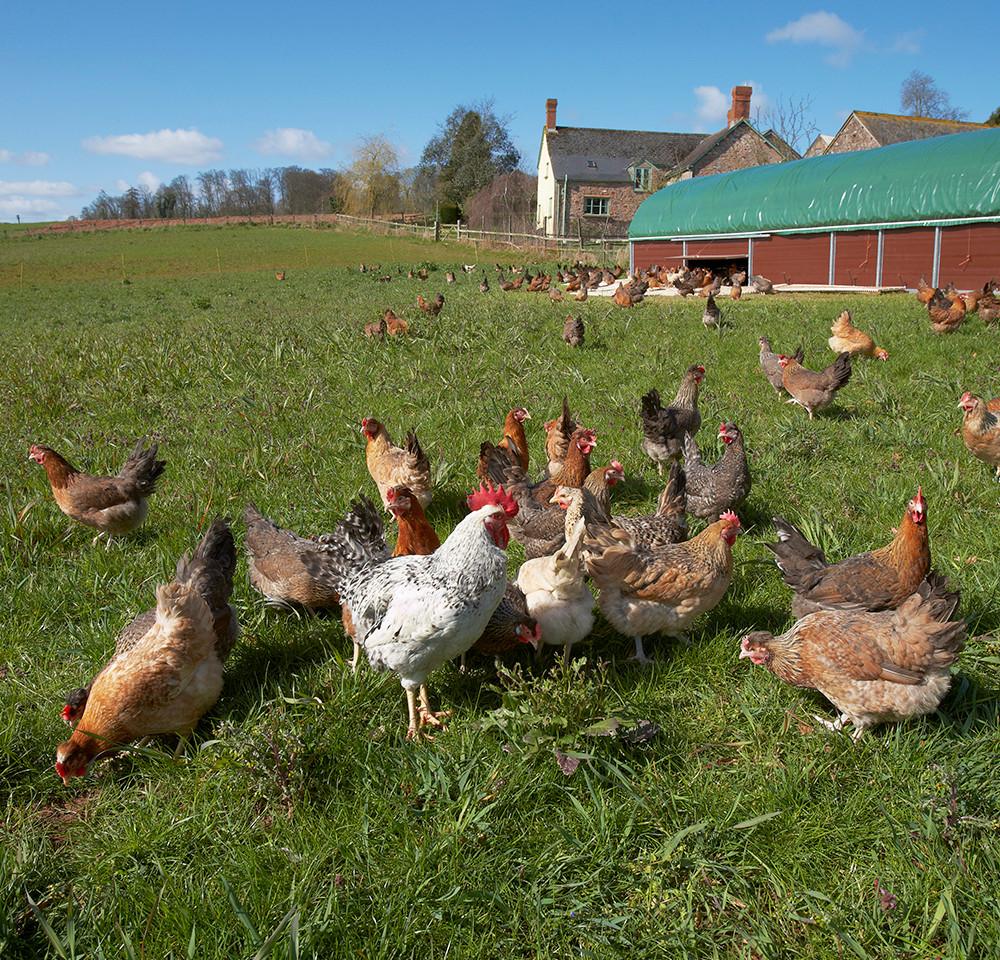 Fenton Farm
