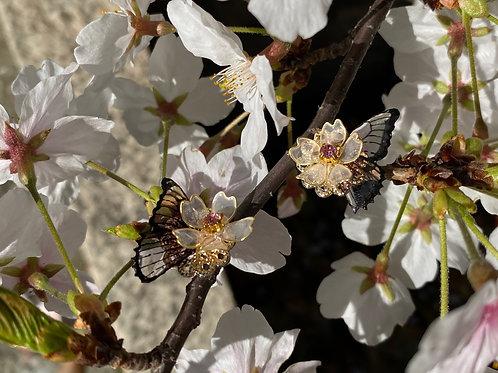 butterfly × sakur ピアス(樹脂/アレルギー対応)
