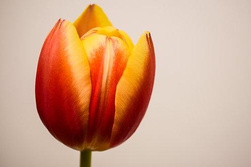 'Bloemen' Photo Print