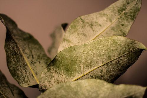 'Nude Leaf' Photo Print