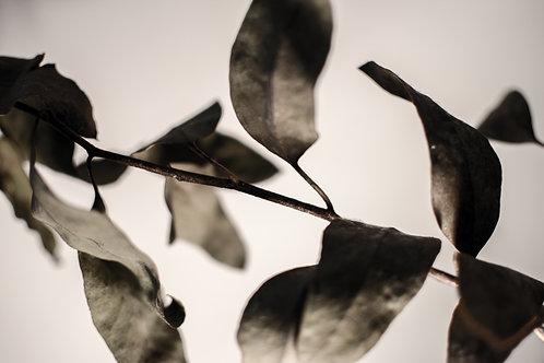 'Midnight Leaves' Photo Print