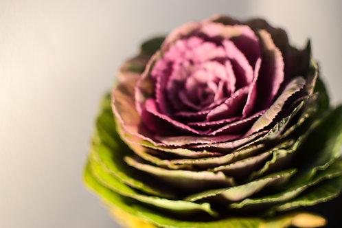 'Brassica' Photo Print