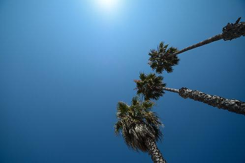 'Towering Palms' Photo Print