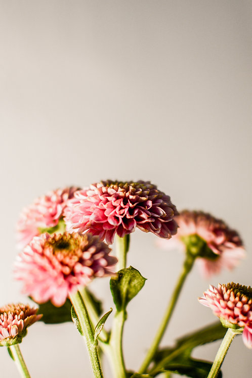 'Bloomin' Lovely' Photo Print