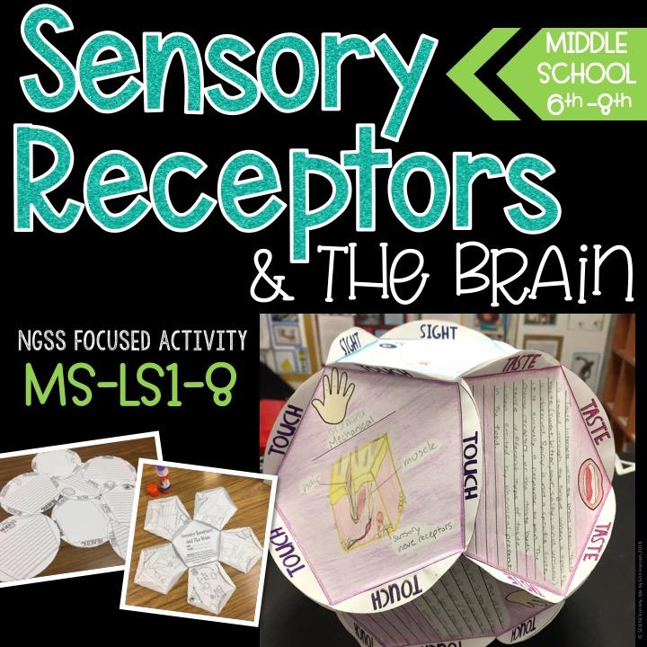 Sensory Receptors Activity