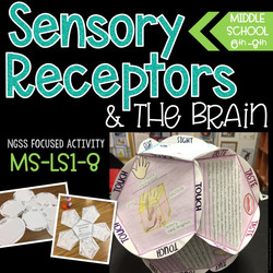 Sensory Receptors Activity - Middle School Science - Hands On