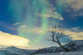 Nordlicht-Baum - Kvaløya, Norwegen