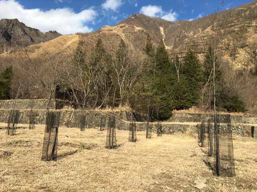 Ashio Reforestation