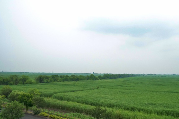 Watarase wetland