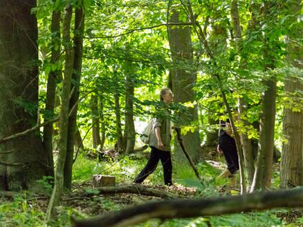 UNESCO World Heritage beech forest Grumsin – catalysator of ecosystem-based sustainable development