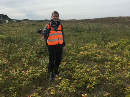 Beach wrack management in the South Baltic region