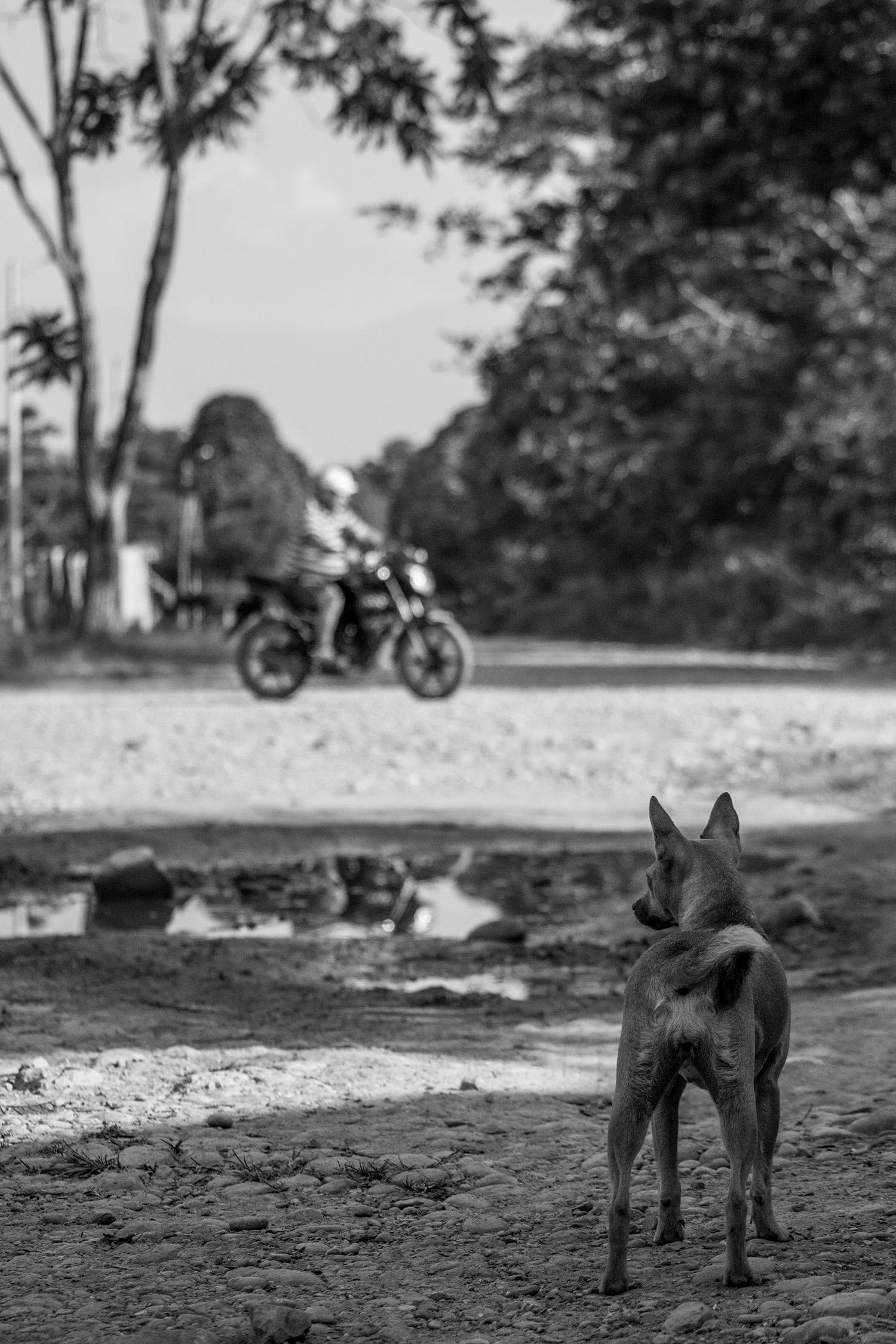 Perro en El Castillo