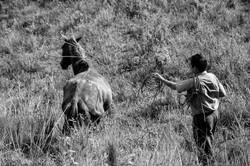 enlazando la bestia