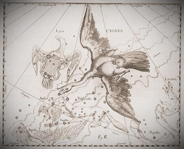 Le Cygne par Johannes Hevelius, dans l'Uranographia, 1690