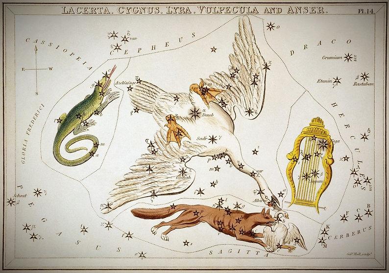 """""""Lacerta, Cygnus, Lyra and Vulpecula and Anser"""", planche 14extraite duMiroir d'Uranie, un jeu de cartes célestes accompagné d'un traité de vulgarisation sur l'astronomie de Josaphat Aspin"""