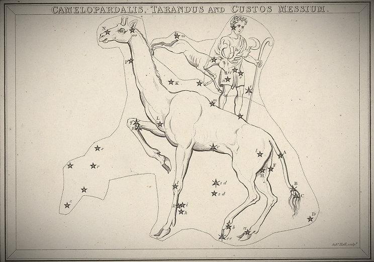 camelopardalis Girafe