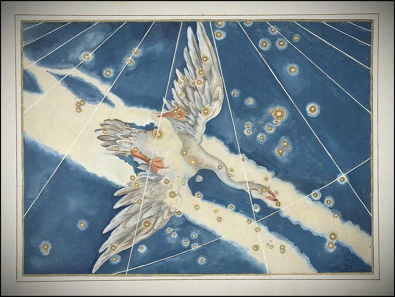 Johann Bayer Cygnus, le cygne, constellation, Ciel de Nuit, Jean-Brice Gayet