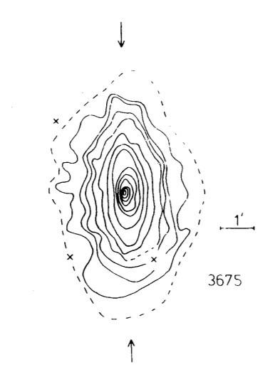 Distribution des isophotes B de NGC 3675