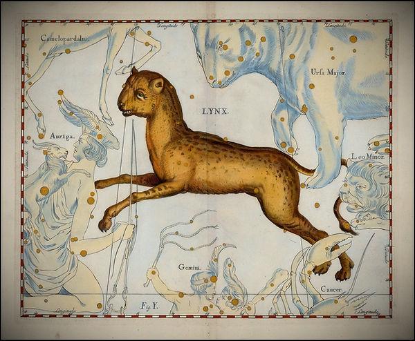 Johannes Hevelius Lynx Constellation Jean-Brice GAYET Ciel de nuit