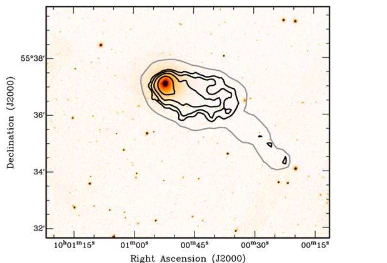 Image HI intégrée de NGC 3073, on voit les deux queues « superposées »