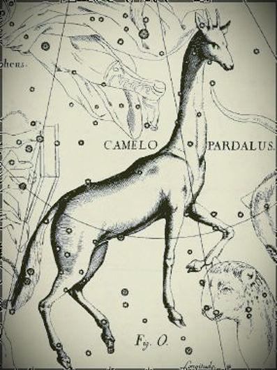 Girafe_edited.jpg