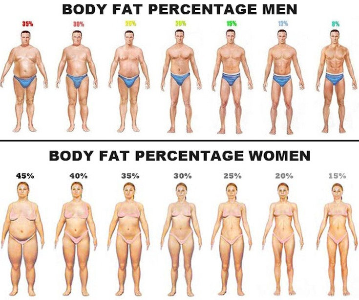 FREE Body Composition