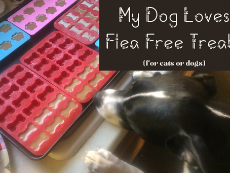Flea Free Treats--for dogs and cats!
