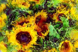 _Sunflower_