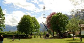 Der einsame Maibaum in Kuchl