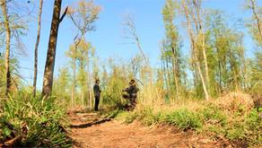 Holzabsätze eingebrochen: Forstwirtschaft nutzt die Zeit für Waldhygiene