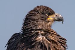 eagle day-02894-2