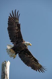eagle day-02999.jpg