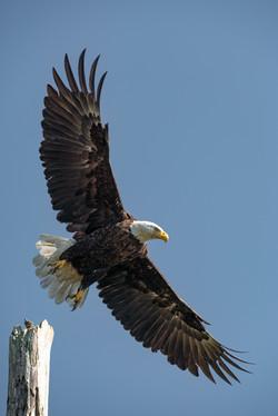 eagle day-02999