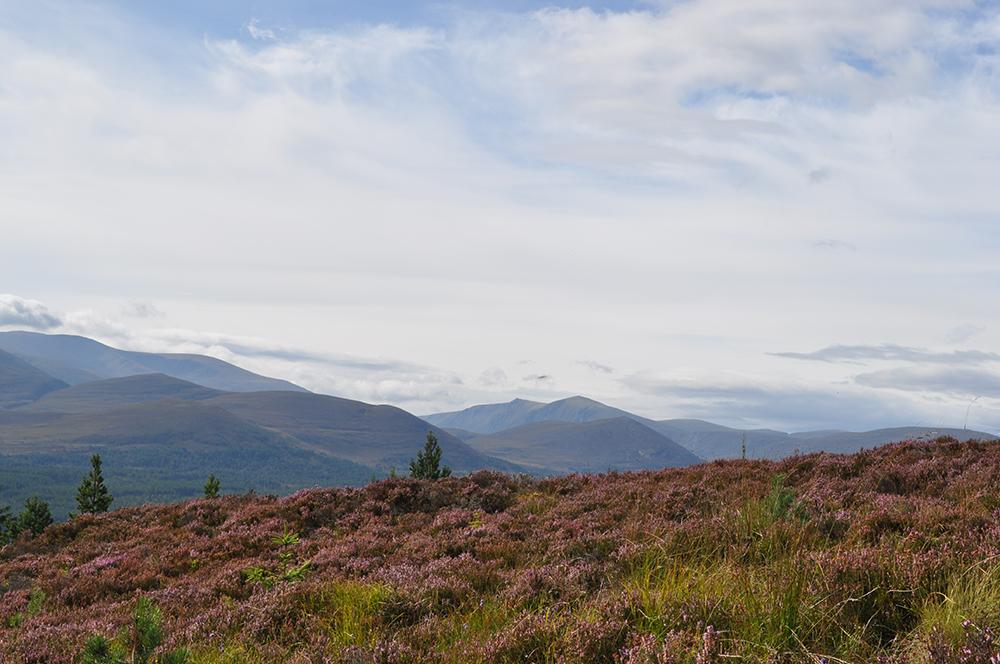 Cairngorms National Park : Scotland