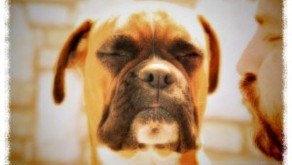 Bipolar Fleas and Early Warning Signs!