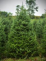 Stock tree 1.jpg