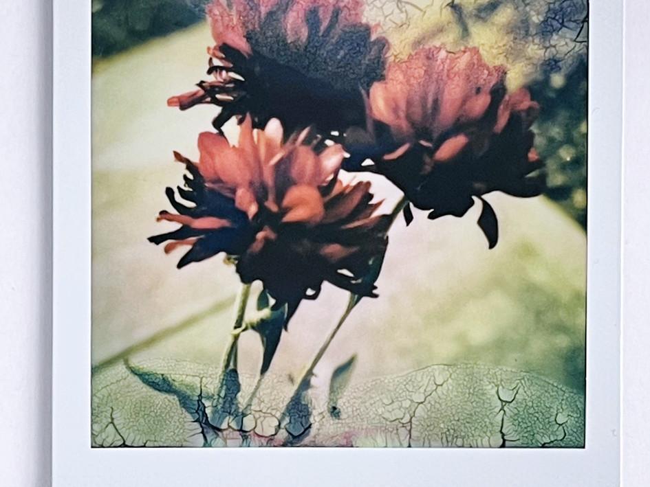 Soaked Polaroid Print
