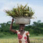 ghana-farming-header.jpg