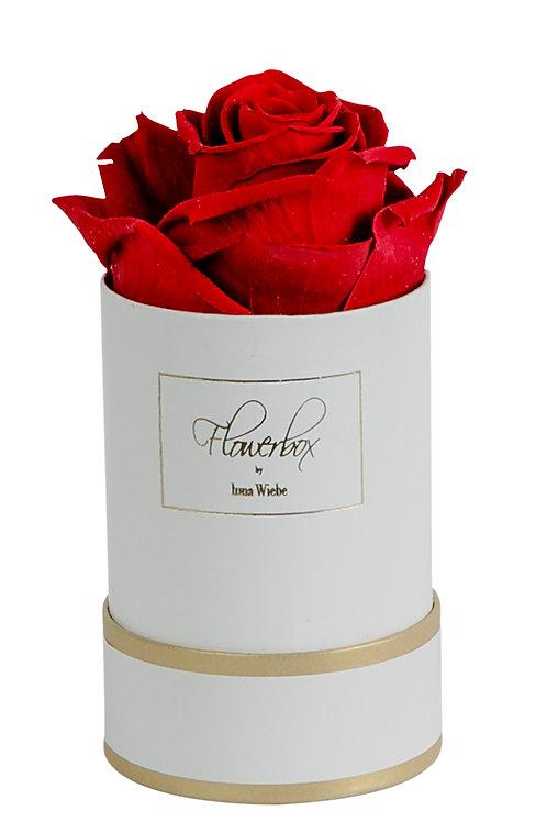 Valentine Red XS Rund Weiß/Gold