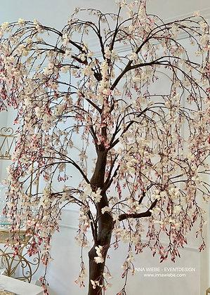 Kirschblütenbaum 3m weiß/rosé