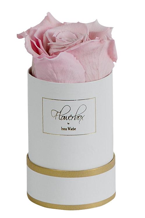 Lovely Rose XS Rund Weiß/Gold