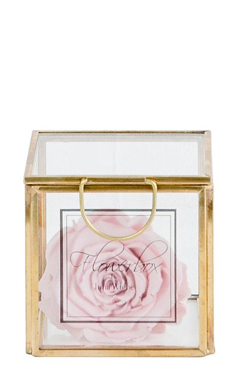 Lovely Rose XS Deluxe