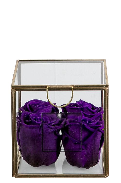 Violet S Deluxe
