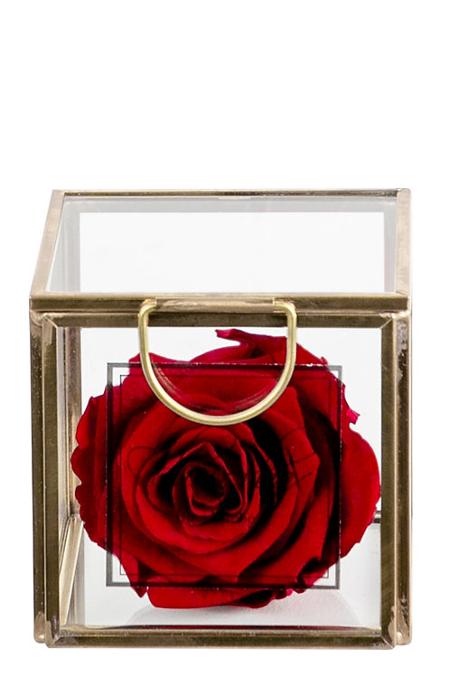Valentine Red XS Deluxe